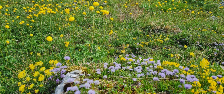 Wanderung auf die Benediktenwand - Blumenwiese