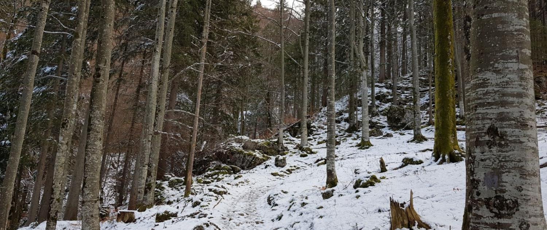 Winterwanderung Bodenschneid: Aufstieg