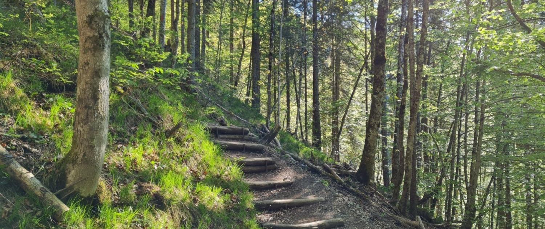 Wanderung auf den Ross- und Buchstein: Aufstieg im Wald