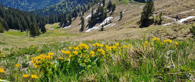 Wanderung auf den Roßstein - Aufstieg im Frühling