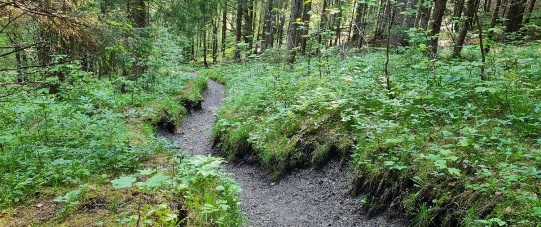 Wanderung auf den Schildenstein - Aufstieg im Wald