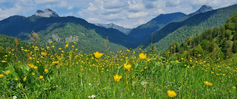 Wanderung Schildenstein - Pause auf der Bergwiese