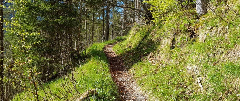 Wanderung auf den Schinder - Steig durch den Wald