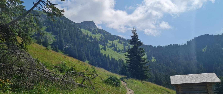 Wanderung zur Schneetalalm - Aufstieg